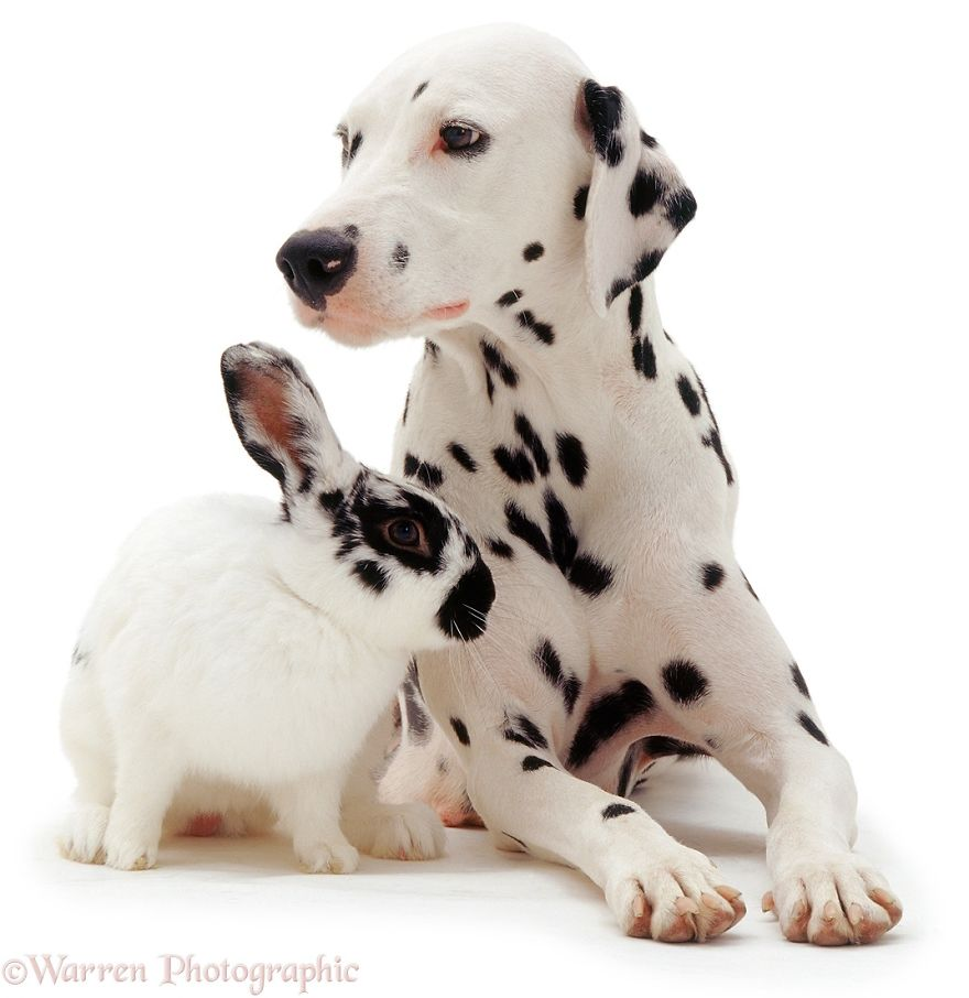 cute-matching-pets-warren-photographic-3-57e934ee6caec__880