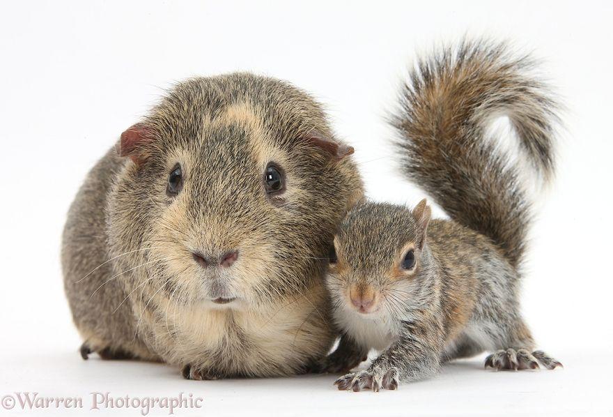 cute-matching-pets-warren-photographic-34-57e9353c7d583__880