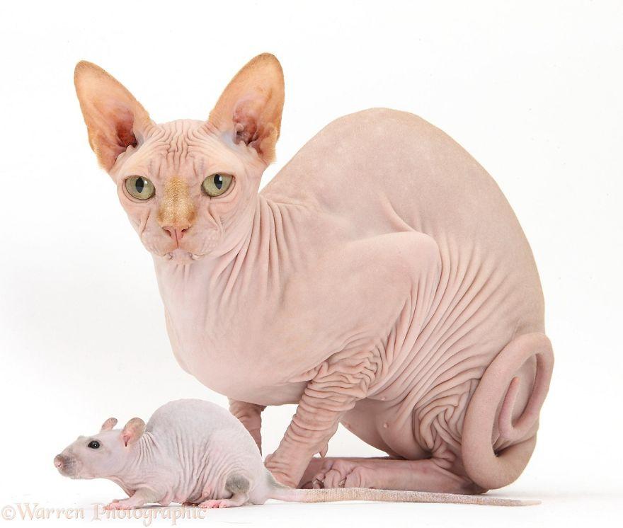 cute-matching-pets-warren-photographic-46-57e935588da34__880