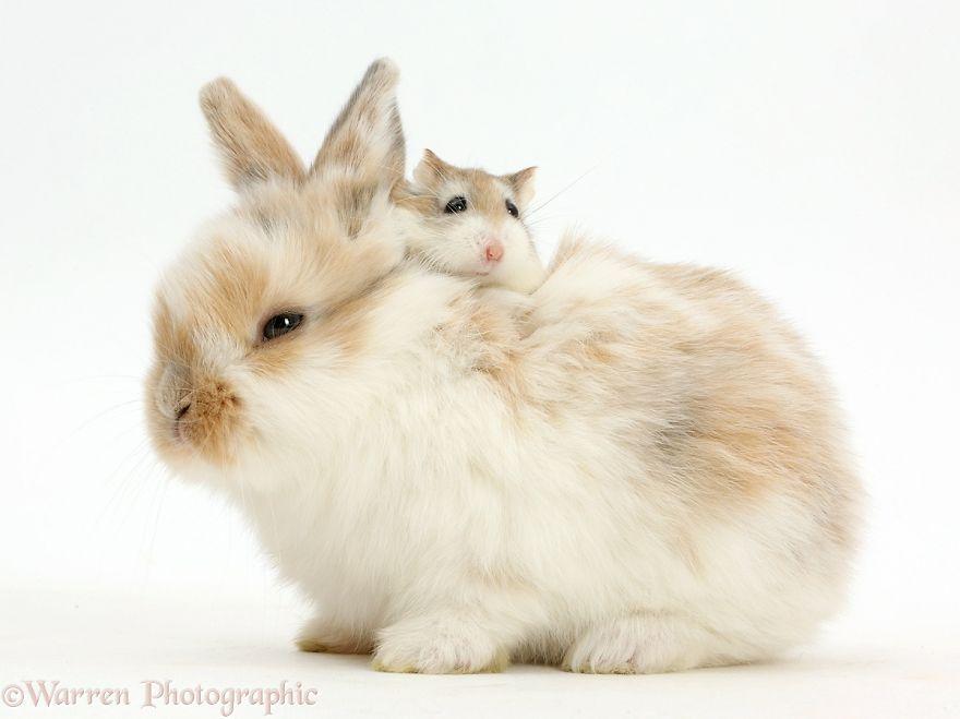cute-matching-pets-warren-photographic-49-57e9355d6a944__880