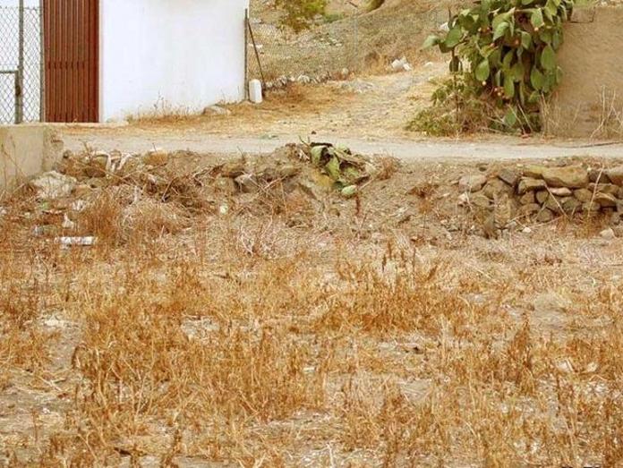 Перевірка зору: знайдіть кота