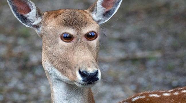 Як виглядали б тварини, якби їхні очі були спереду
