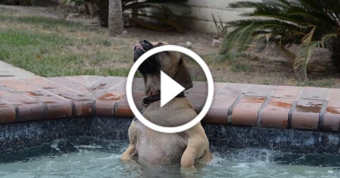 Собака вперше потрапила в басейн з гідромасажем. Її реакція насмішила усіх!