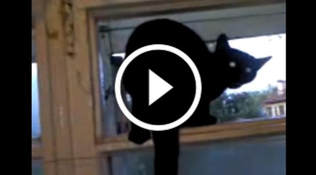 Кішка висунулась у вікно і ГАВКАЄ. Але варто було господині її застукати…