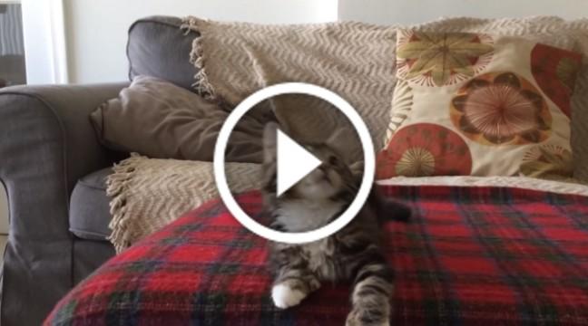 Кумедний танець цього кошеняти зарядить вас позитивом на цілий день!