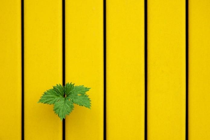 20 фотографій для любителів мінімалізму