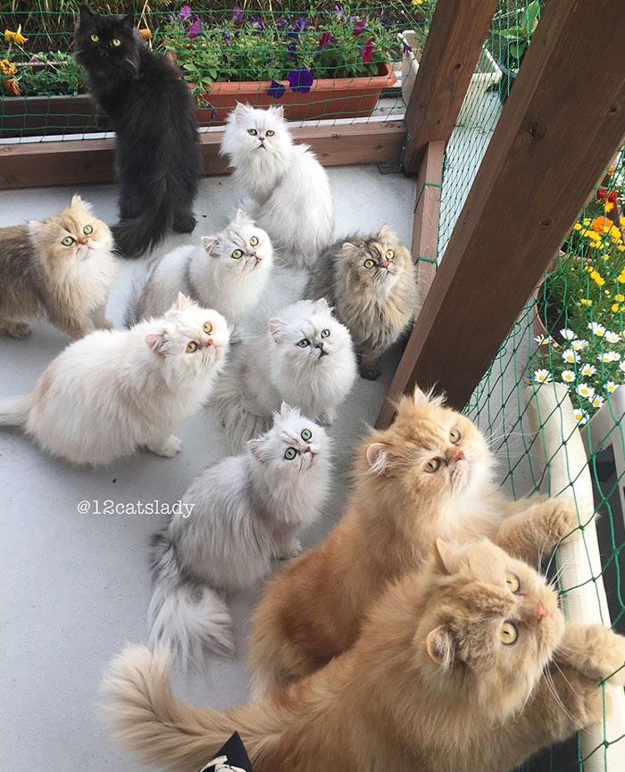 12-cats-lady-japan-38