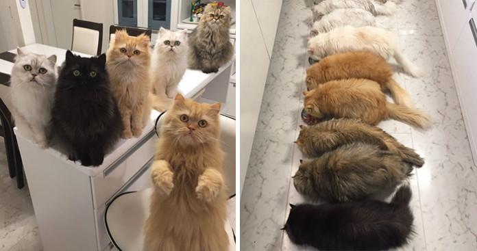 """Жінка з дванадцятьма котами"" стала новою улюбленицею Інстаграму"