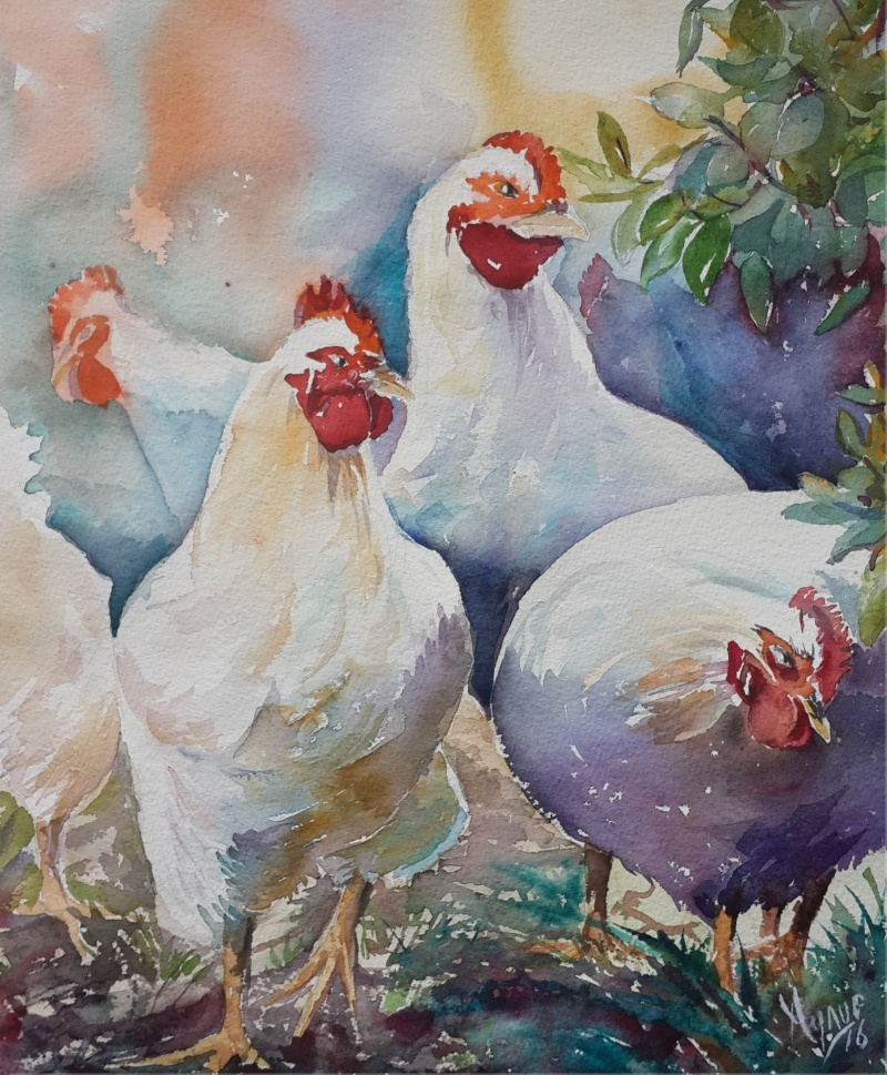 17787715-white-chickens-1475580262-800-a7aaa40e57-1475608788