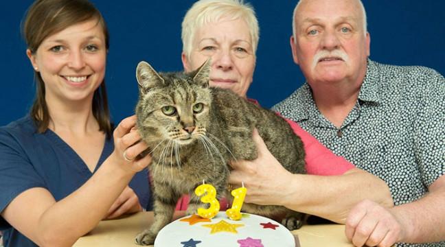 Найстаршому в світі коту виповнився 31 рік