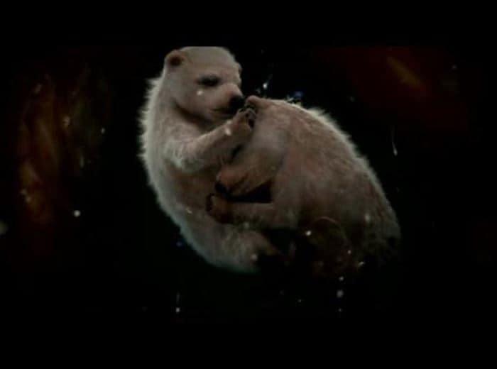 animals-womb-2