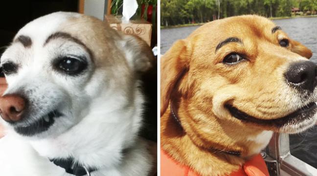10 смішних бровастих собак