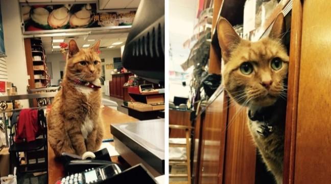 У китайському магазині в Нью-Йорку вже 9 років працює кіт-консьєрж
