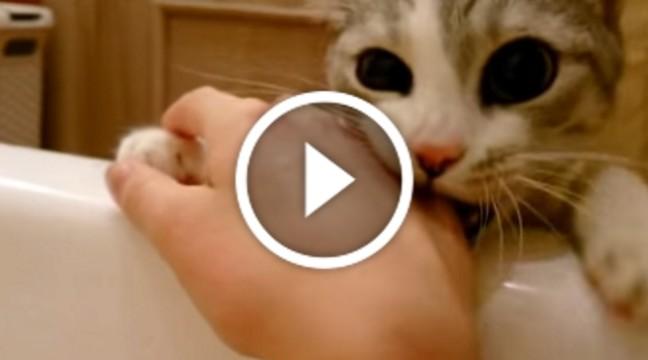 Кішка рятує господиню. Це треба бачити!