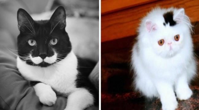 10 котів, яких розфарбовувала сама природа
