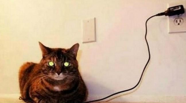 10 незрівнянних котів, які народилися для того, щоб прославитися