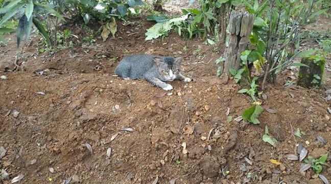 Кіт з розбитим серцем цілий рік провів на могилі своєї власниці