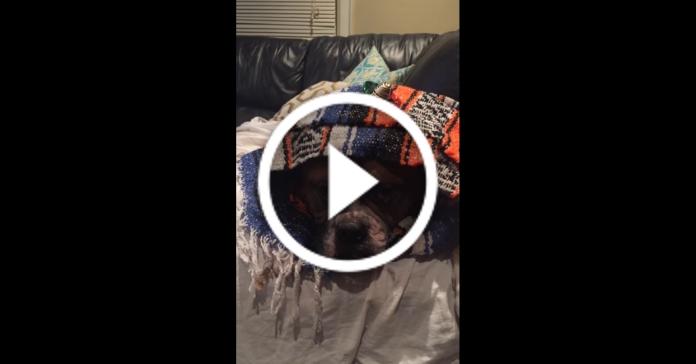"""Поки пара відпочиває, """"нянька"""" їхнього пса знімає їм веселі відео"""