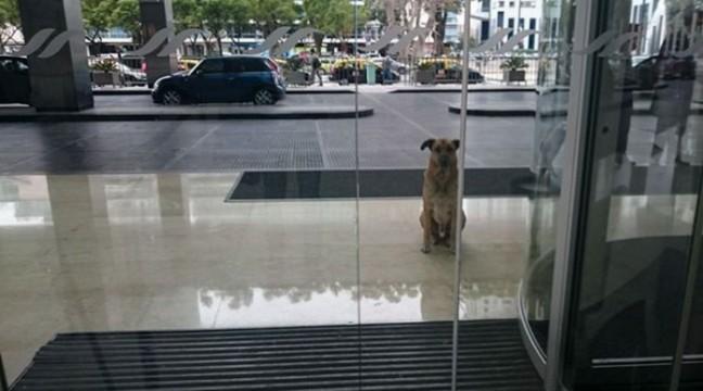 Стюардеса прихистила собаку, який цілих 6 місяців чекав її біля дверей готелю