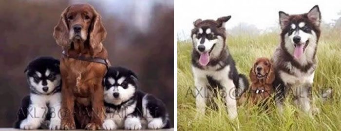 animal-friends-growing-up-together-then-now-19-585bc62ae1056__700