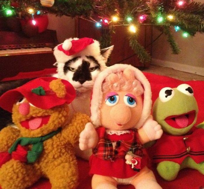 animals-do-not-like-christmas-583836a928592__700