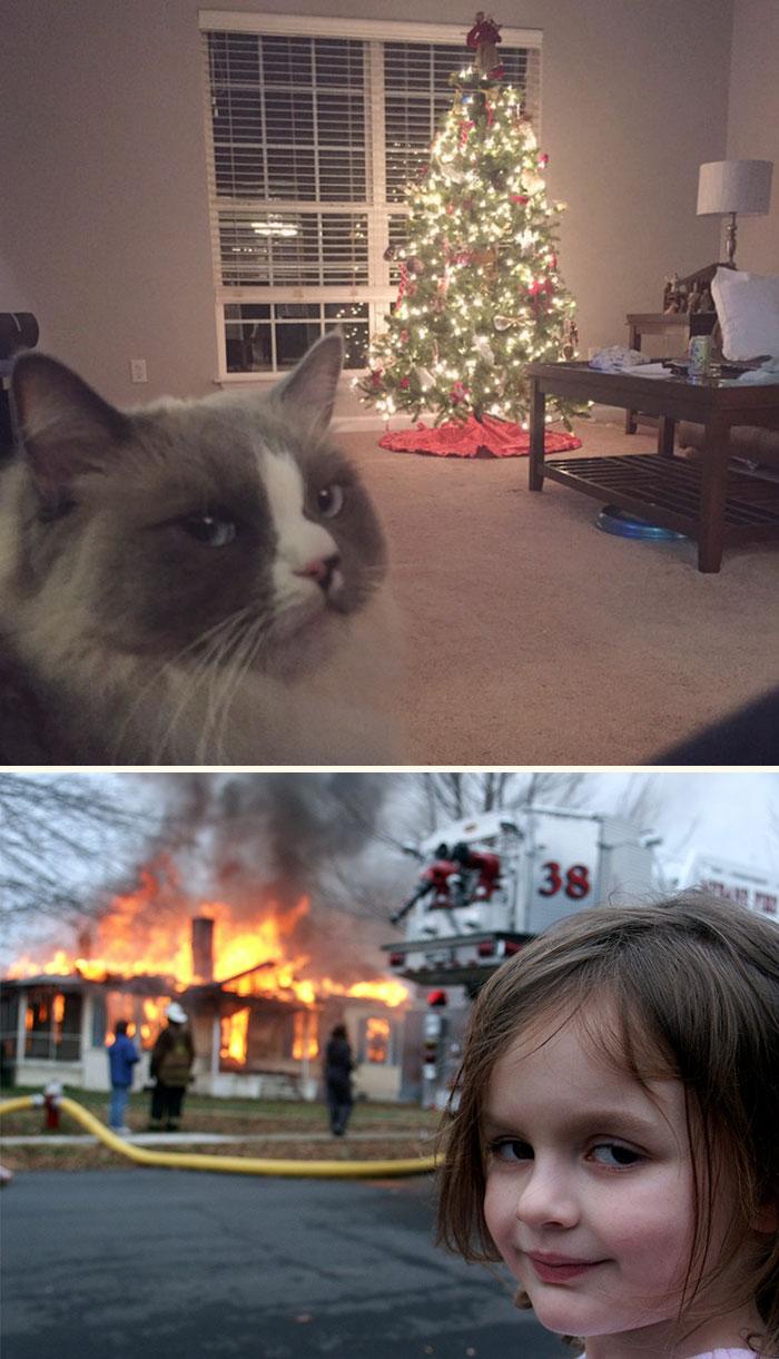 animals-do-not-like-christmas-new1