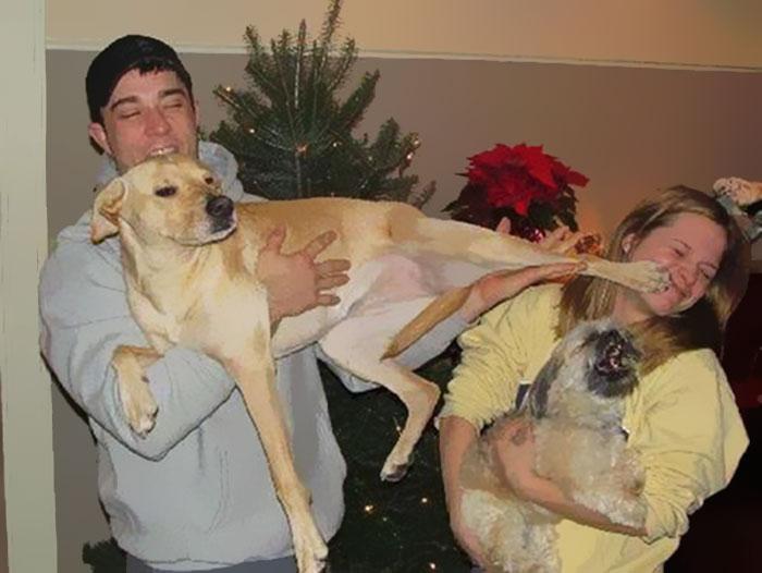 animals-do-not-like-christmas76-584ff17f2d77e__700