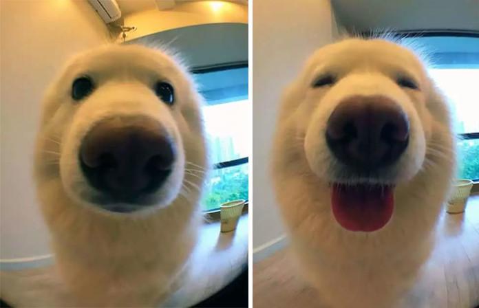 Як тварини реагують на похвалу? Власники поділилися фотографіями до та після