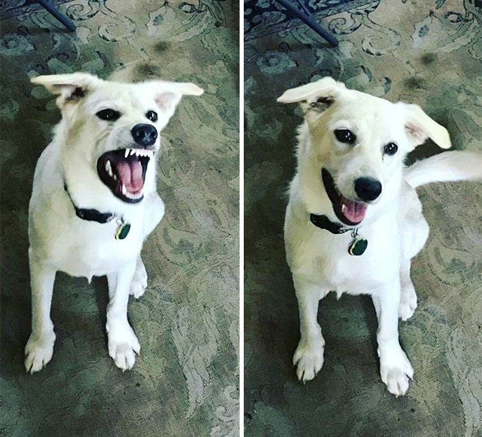 before-after-called-good-boy-25-5860d2dbb98e0__700