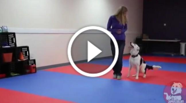 Лише погляньте, як ця дівчина видресерувала свого пса