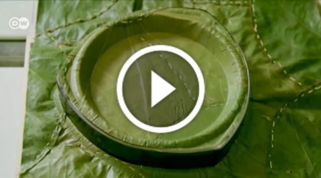 У Німеччині навчилися виготовляти еко-посуд з листя