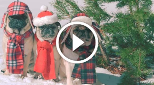 SHE & HIM зняли милий різдвяний кліп з мопсами у головній ролі