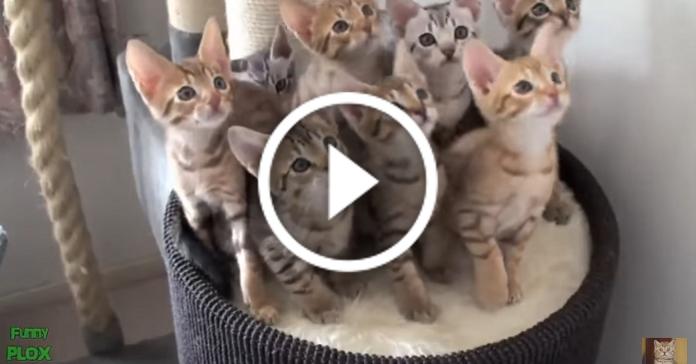 Найсмішніших тварин Інтернету зібрали в одному відео. І ніякого психолога не треба!