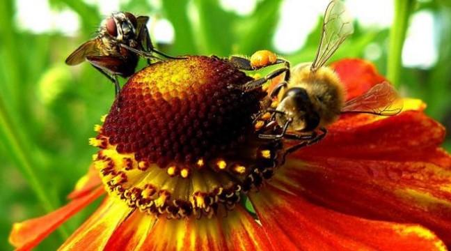 Муха і бджола – одна з кращих притч про дружбу