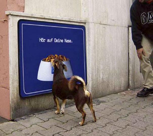 funny-animal-fails-16-586b689b990bc__605