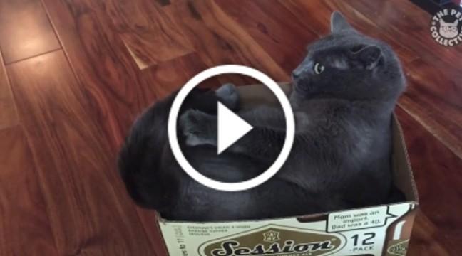Весела добірка котів, які думають, що хвіст – це іграшка