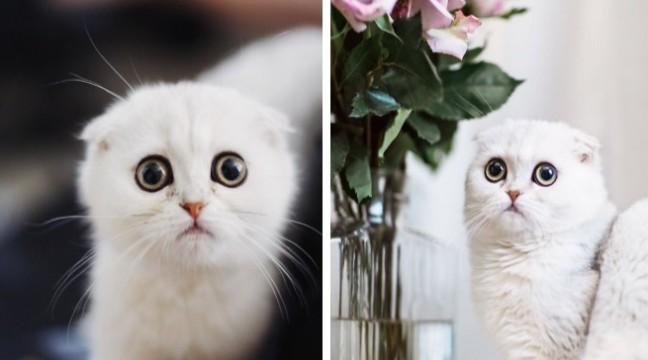 Цей котик завжди дуже збентежений. І ніхто не знає чому