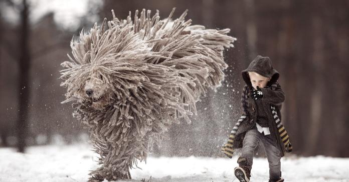 Коли твій собака – реальне чудо-юдо