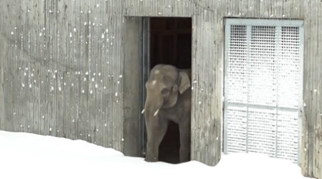 Зоопарк у Орегоні засипало снігом. Погляньте, як на це відреагували тварини