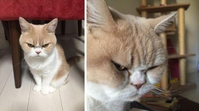 Кажете, що коти – це милі тваринки? Скажіть це йому!