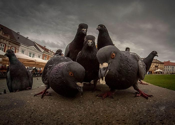 animals-about-to-drop-album-photos-58aeb0ce59ff1__700