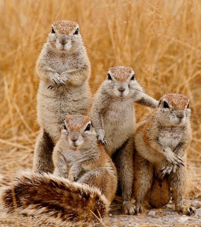 animals-about-to-drop-album-photos-58aeb22cb6327__700