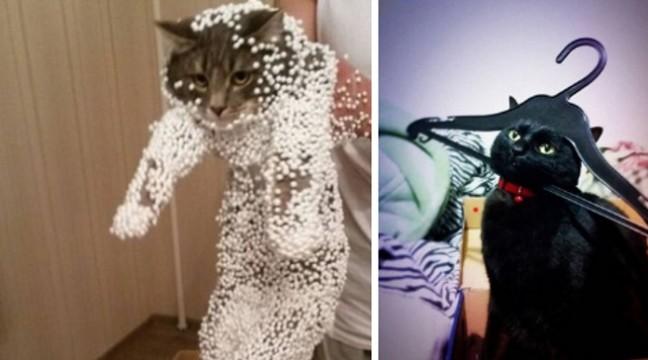 10 котів, з якими ніколи не занудьгуєш