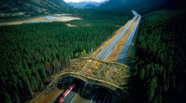 """10 """"зелених мостів"""", які зберігають життя тисячів тварин щороку"""