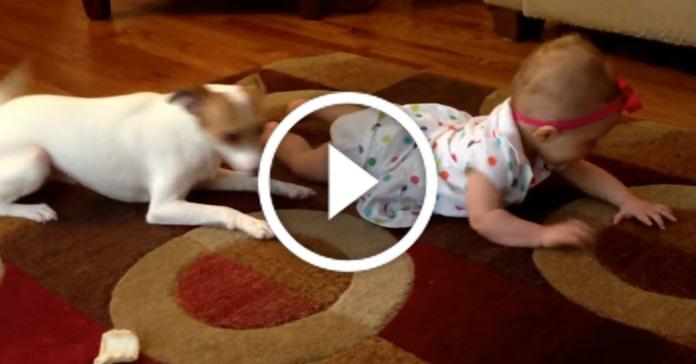 У дівчинки не виходило повзти рачки, і пес вирішив її навчити