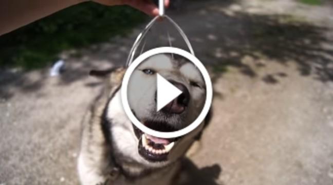Як зробити собаку щасливою? Сепер майстер-клас