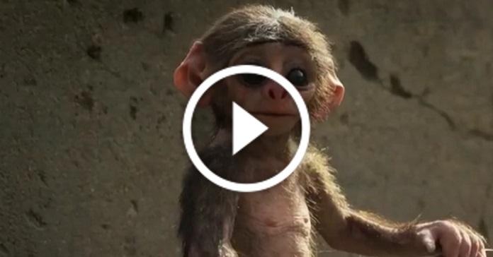 Невдалі дублі у тварин (смішна нарізка відео)