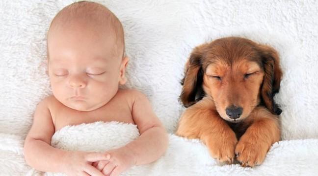 30 фото, які доводять, що собаки – найкраще снодійне для дітей