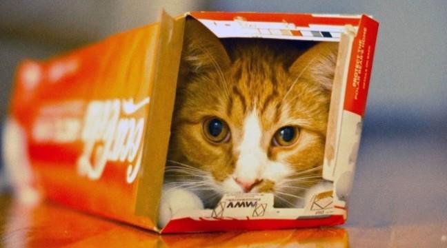 10 котів, які знайшли свою зону комфорту