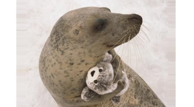 Тюленеві подарували м'яку іграшку і відтоді вони нерозлучні